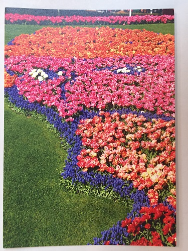 Birthday Tulips in Van Gogh, Keukenhof Card